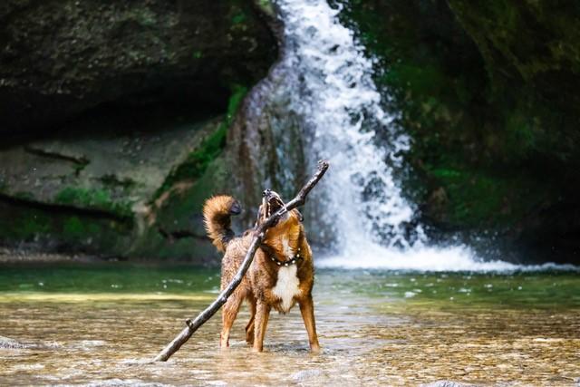 Faszination Hunde-Fotografie