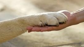 Tierwald – Baumbestattungen für Haustiere