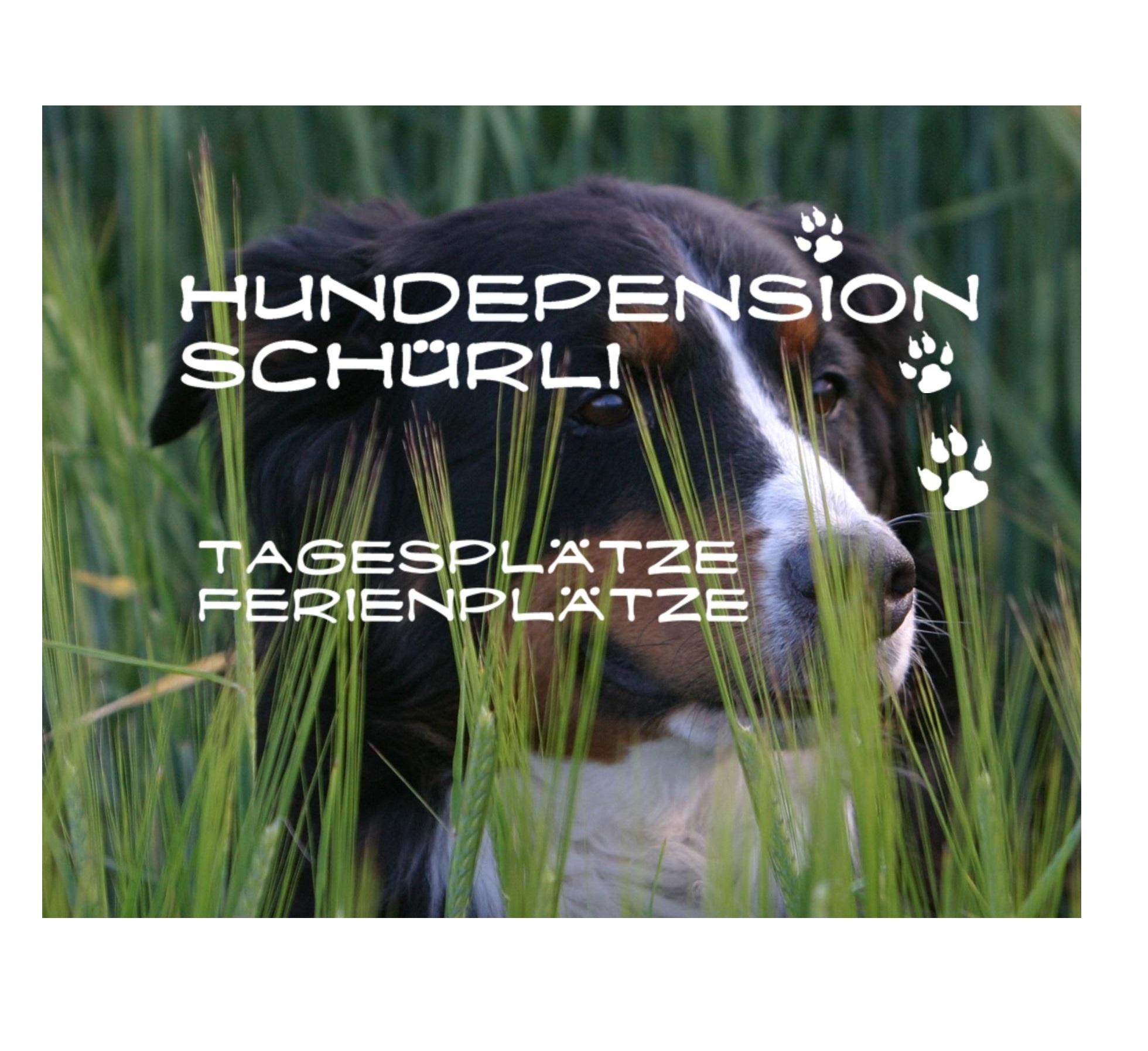 Hundepension_Schürli