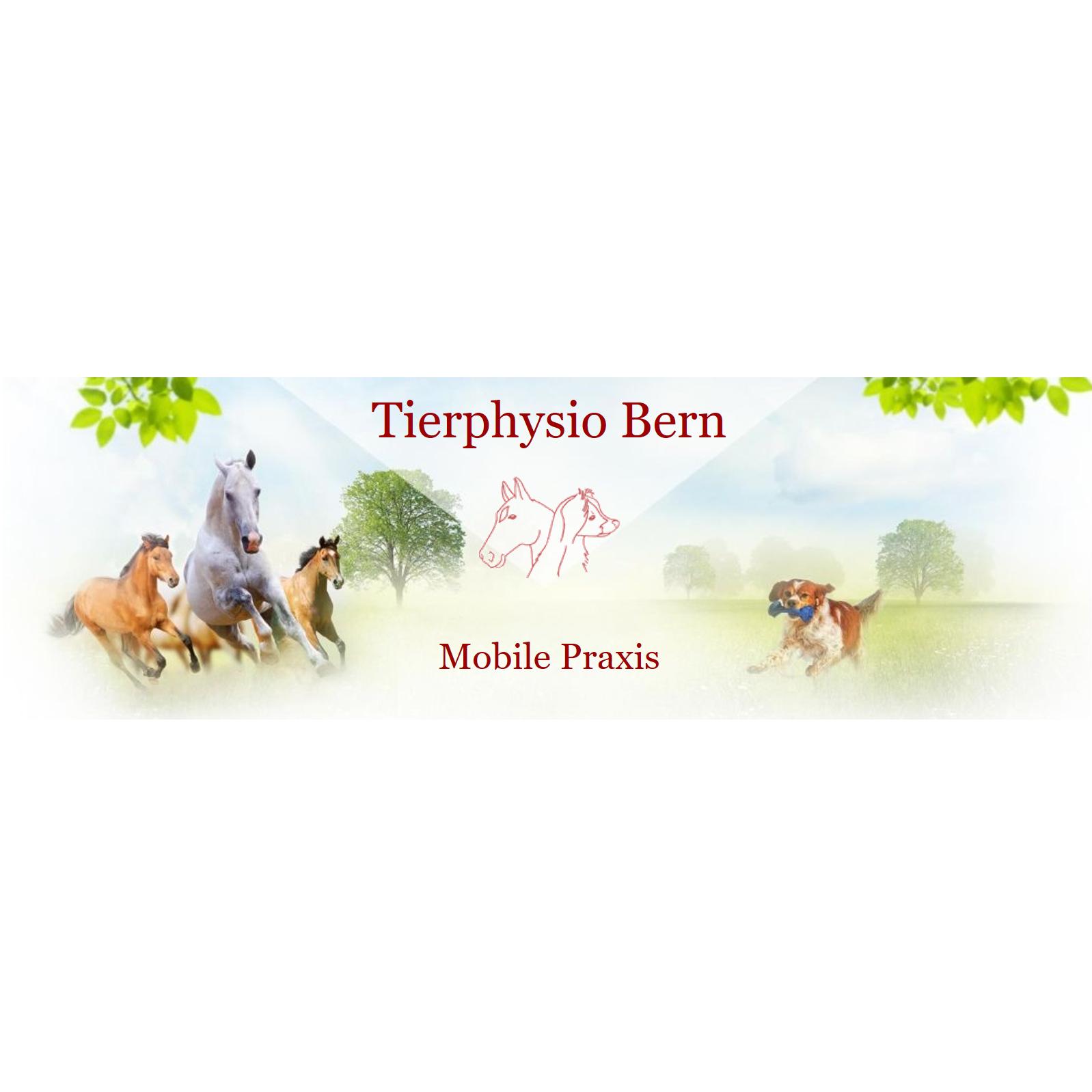 Tierphysio-Bern